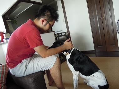 日本ドッグトレーナー協会_保護犬支援プロジェクト_太斗_20120921-1