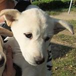 日本ドッグトレーナー協会_保護犬支援プロジェクト_保護犬_スピカ