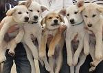 日本ドッグトレーナー協会_保護犬支援プロジェクト_保護犬_5つ子