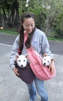 日本ドッグトレーナー協会_保護犬支援プロジェクト_保護犬_5つ子_20121024-2