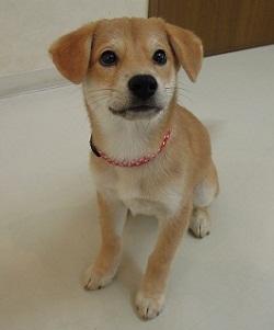 日本ドッグトレーナー協会_保護犬支援プロジェクト_保護犬_5つ子_20121107-1