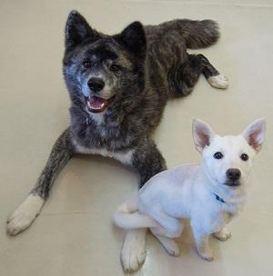 日本ドッグトレーナー協会_保護犬支援プロジェクト_保護犬_5つ子_20121113-2