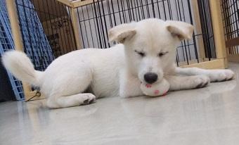 日本ドッグトレーナー協会_保護犬レポート_ミラ_2012-1101-2