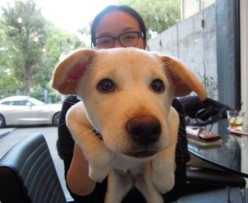 日本ドッグトレーナー協会_保護犬支援プロジェクト_保護犬_5つ子_20121107-4