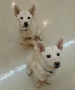 日本ドッグトレーナー協会_保護犬支援プロジェクト_保護犬_5つ子_20121107-9