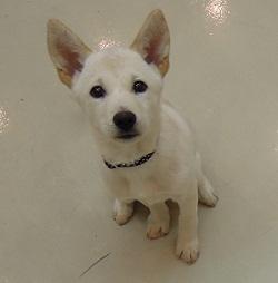 日本ドッグトレーナー協会_保護犬支援プロジェクト_保護犬_5つ子_20121107-7