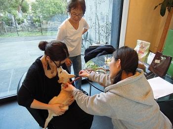 日本ドッグトレーナー協会_保護犬支援プロジェクト_保護犬_5つ子_20121107-5