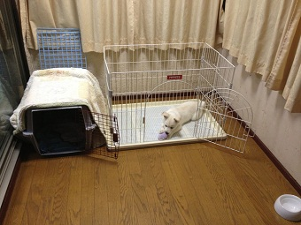 日本ドッグトレーナー協会_保護犬レポート_ミラ_2012-1101-4